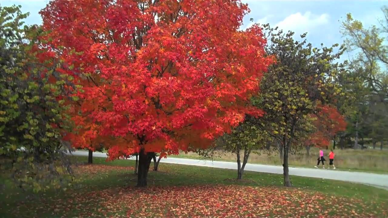 Pennsylvania Fall Foliage: A MapQuest Guide | HuffPost on dubois pa mapquest, west chester pa mapquest, greenville mapquest, erie mapquest, valley forge pa mapquest,