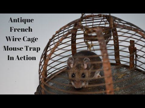 Antique French Wire Cage Mouse Trap In Action. Mousetrap Monday.