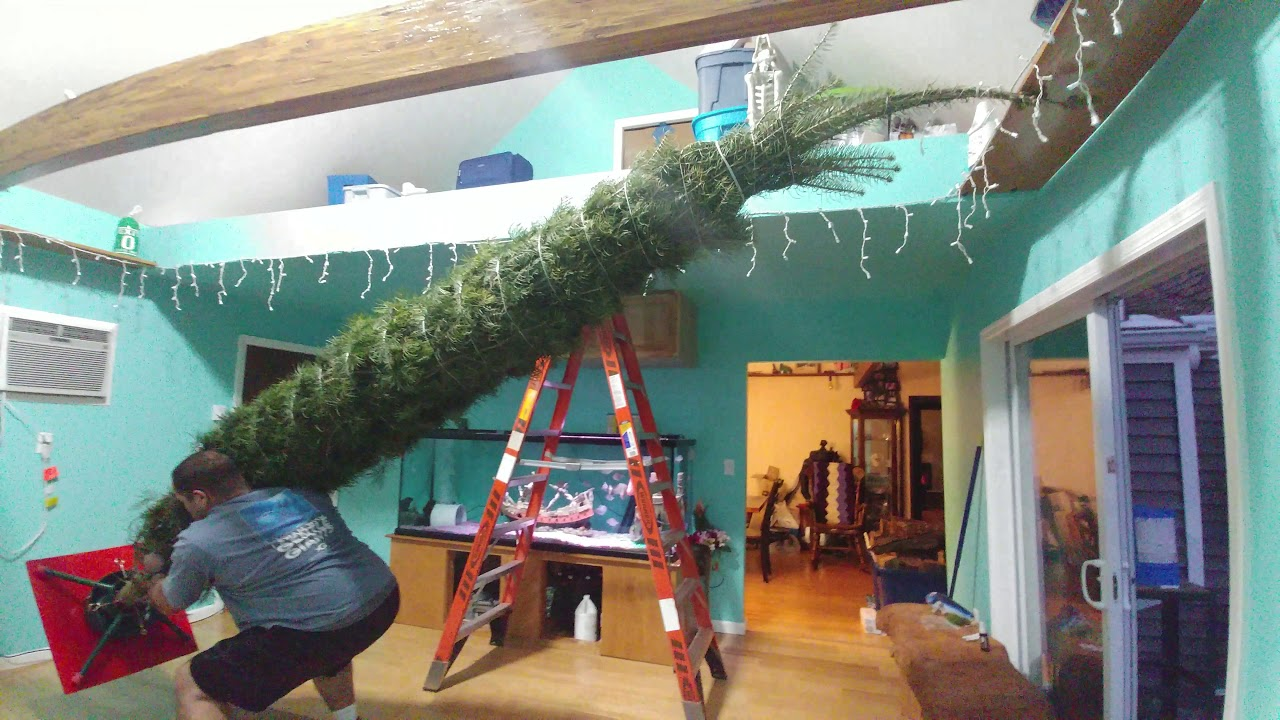 15 ft tall christmas tree from the abbey newton new jersey