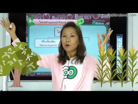 ชีววิทยา ตอน โครงสร้างและหน้าที่ของพืชดอก (Part 2)