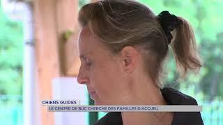 Chiens guides : le centre de Buc cherche des familles d'accueil
