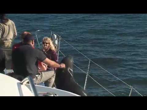 Walvis Bay Boat Trip near Walvis Bay Namibia