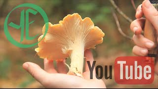 Chanterelle Chanterelle Chanterelle! and Other Mushrooms