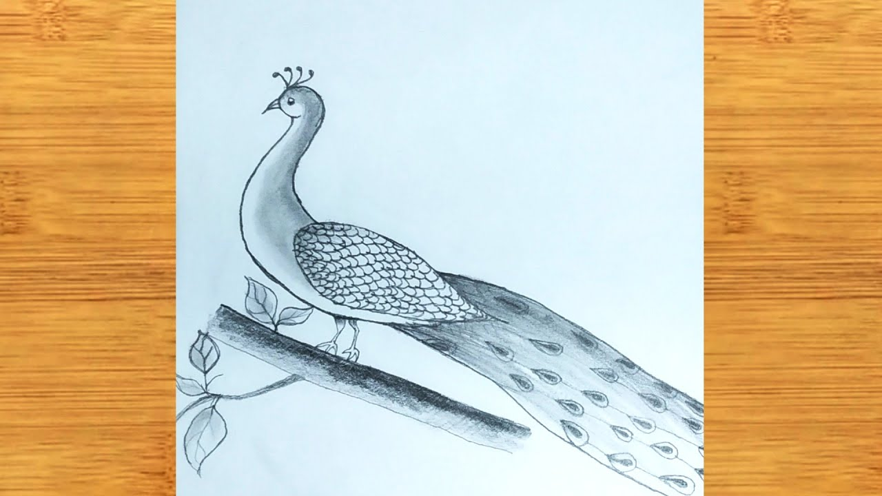 How To Draw A Peacock by pencil sketch - step by step ...