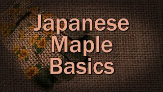 Japanese Maple Basics – Family Plot