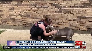 Check This Out: Stolen dog reunited with owner