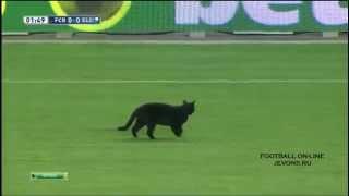 Кот на футбольном поле