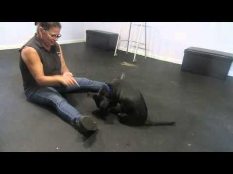 Teaching Impulse Control - first session, 1 yr old rescued dog.