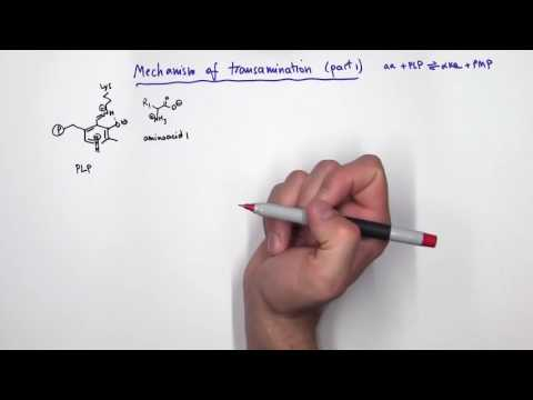 PLP (Pyridoxal Phosphate) Reactions