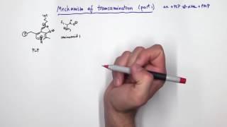 PLP (Pyridoxal Phosphate) Reactions