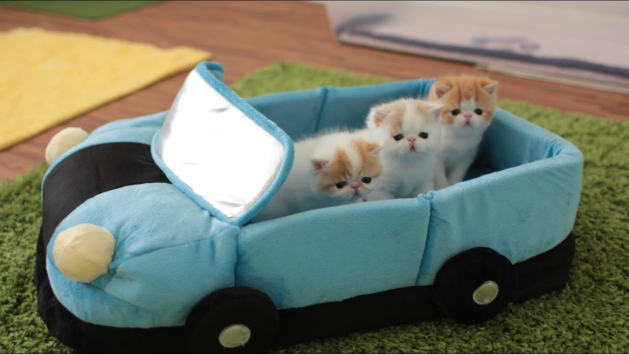 how to keep week old kitten warm