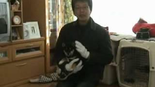 犬しつけ DVD http://inusituke.ran-maru.net/ 森田流 犬の躾け マニュ...