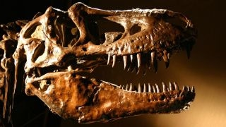Dinosaur history gets revised?