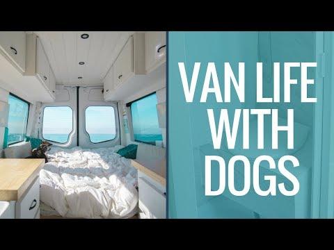VAN LIFE With Dogs | Van Living Full Time