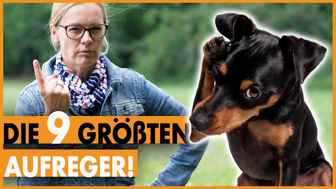 partnervermittlung hundefreunde