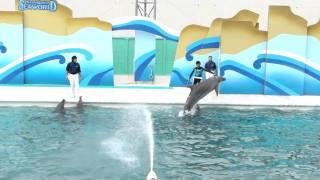 SeaworlD Дельфины 2