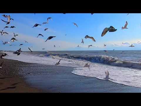 🔔Лазаревское зимой\ Пляж Морская Звезда\ Сочи 2020 море\ Сочи -2 Погода в Сочи вода 9,5