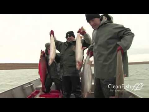 The Nunavut Wild Arctic Char Story