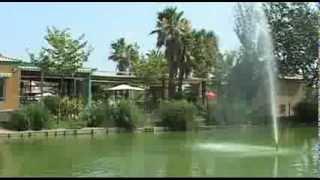 Camping Eucaliptus Catala
