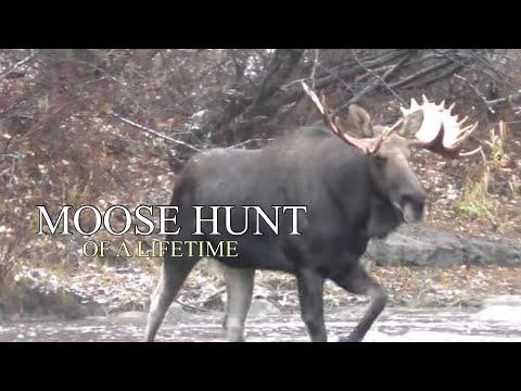 A Moose Hunt of A Lifetime: 2 Bulls Down