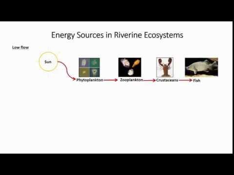Assessing the influence of operation of an environmental flow regulator