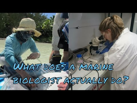 What does a marine biologist actually do?