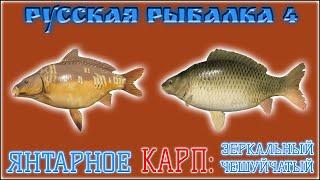 РР4 ЯНТАРНОЕ КАРП РУССКАЯ РЫБАЛКА 4 ЯНТАРНОЕ КАРП RUSSIAN FISHING 4 AMBER LAKE CARP