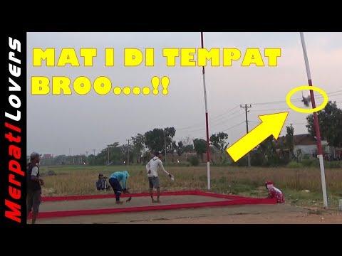 NGERI..!!! Detik Detik Merpati Tabrak Tiang Sampai M4ti Lomba Merpati Kolong Kedungwuni