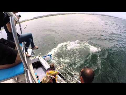 White Shark Africa Internship Promotional Video