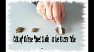 Chinese Carrot Mystery.  Final Update with Carrot Seed Reveal. thumbnail