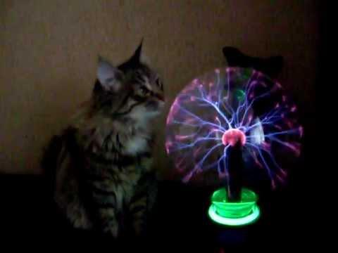 Kitten and a plasma full-sphere(кошка и плазменный шар).avi
