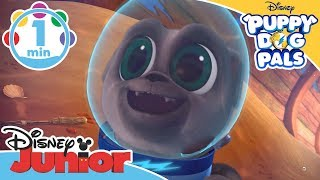Puppy Dog Pals | Scuba Diving Song | Disney Junior UK