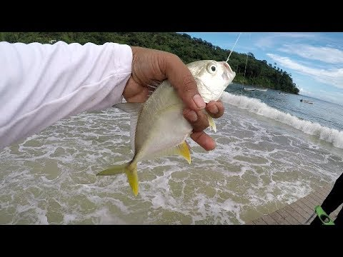 Easy SURF FISHING on the JETTY at MARACAS BEACH - Inshore Fishing - Trinidad, Caribbean
