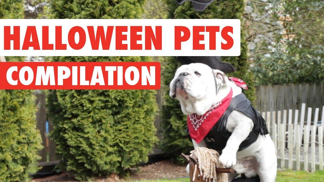 Halloween Pets Video Compilation 2016
