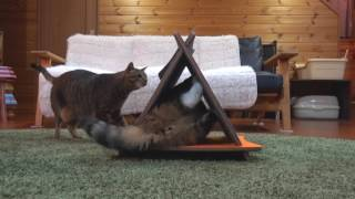 三角爪とぎとまるとはな。-Triangle scratching board and Maru&Hana.-