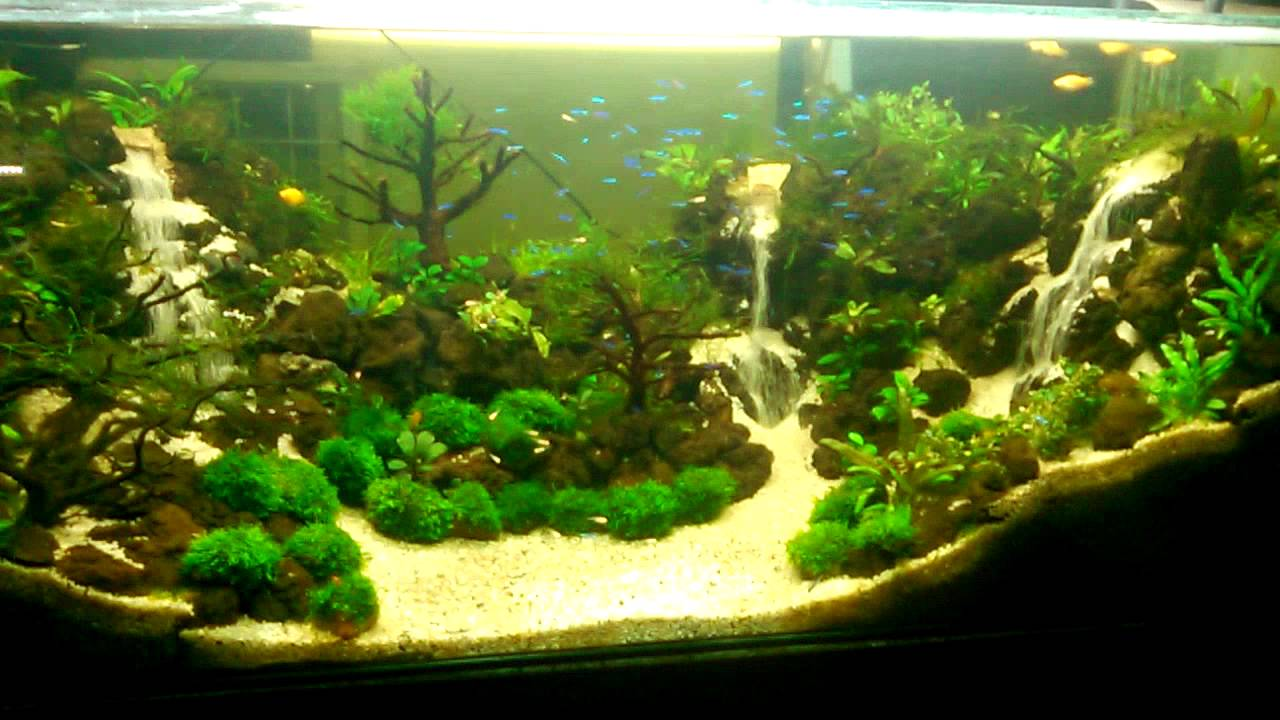 Aquarium hijau youtube - Gambar aquascape ...