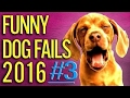 TRY NOT TO LAUGH or GRIN: Funny Pranks   Top Funny Fail Compilation 2017 - Funny Scary Pra