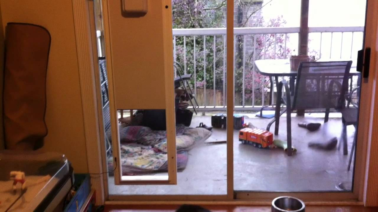 Inside View Of Plexidor Electronic Dog Door Youtube
