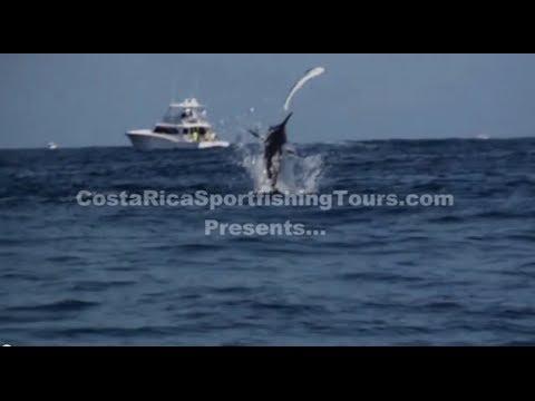 Costa Rica Sport fishing Marlin chasing   a Dorado