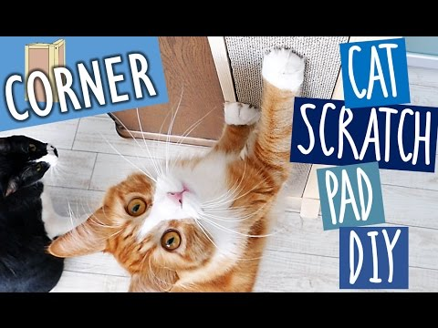 Haku gets a new scratch board | Cat Scratch Pad DIY