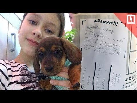 Пропала собака по кличке Дени