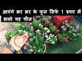 फूलों की बरसात सिर्फ 1 रुपए में|Get Heavy Flowering On Vinca/Sadabaar(English Subtitles)