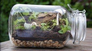 How To Make A Big Bottle Terrarium / Garden In A Jar(ASMR)