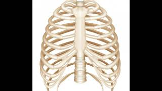 What Is the Ventral Body Cavity