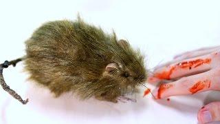 VICIOUS RAT ATTACK!