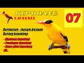 Kepodang Emas Gacor Cocok Untuk Pancingan Dan Masteran Burung Kepodang Yg Malas Bunyi  Mp3 - Mp4 Download