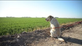 Hunting Dogs Trained In Imperial Valley