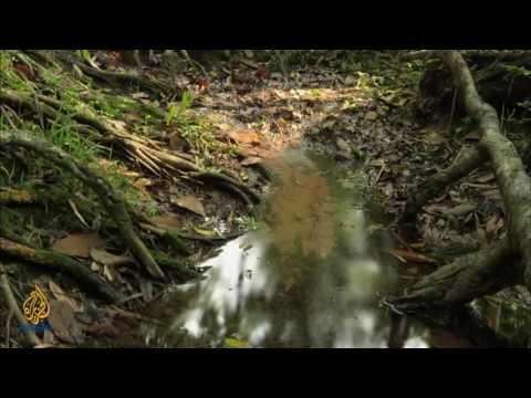 Oil pollution- George Osodi Kings of Nigeria - Artscape