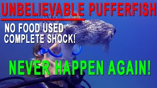 Unbelievable - First Time Scuba Diving in Hawaii with a Oahu Friendly Puffer Fish