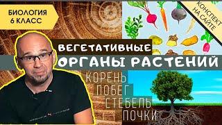 Корень растений | Видеоурок по биологии 6 класс